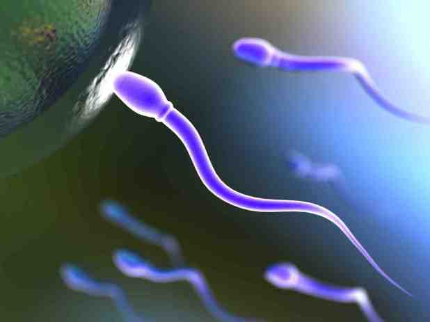 Tipo-de-dieta-pode-afetar-infertilidade-masculina